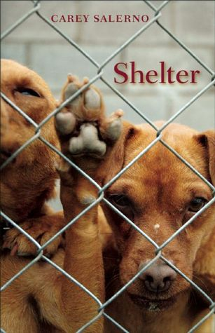 Shelter by Carey Salerno