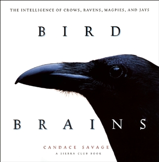bird-brains-the-intelligence-of-crows-ravens-magpies-and-jays