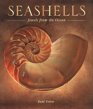 seashells-jewels-from-the-ocean