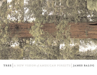 Tree: A New Vision of the American Forest