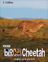 Big Cat Diary: Cheetah