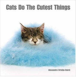 Cats Do The Cutest Things