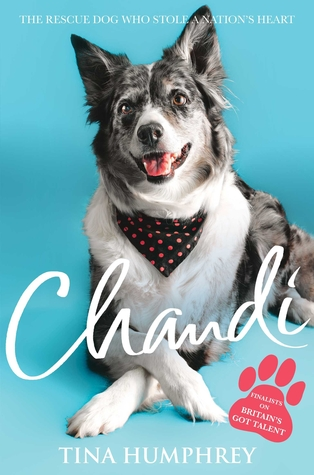 Chandi: The Rescue Dog Who Stole a Nation's Heart