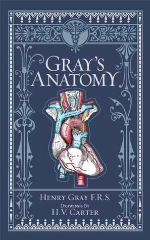 Lily Roths Review Of Grays Anatomy