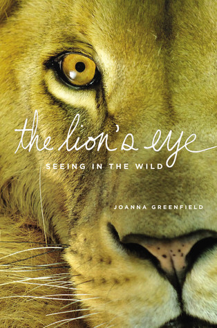 The Lions Eye Seeing In The Wild