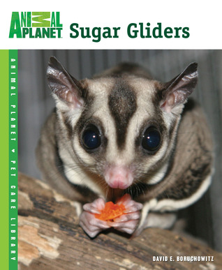 sugar-gliders-animal-planet-pet-care-library