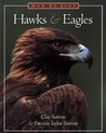 How to Spot Hawks & Eagles