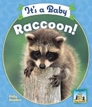 It's a Baby Raccoon!