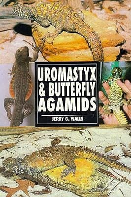 The Guide to Owning Uromastyx & Butterfly Agamids