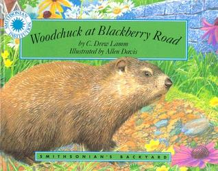 woodchuck-at-blackberry-road