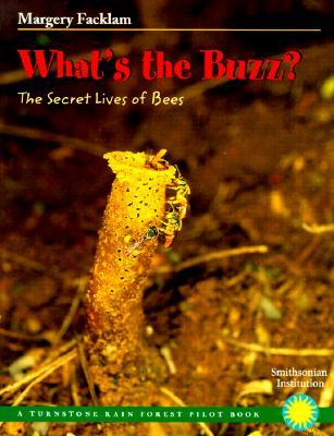 what-s-the-buzz-the-secret-lives-of-bees