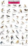 Mac's Field Guide to Northwest Park and Backyard Birds (Laminated Card)