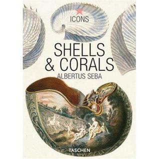 shells-corals