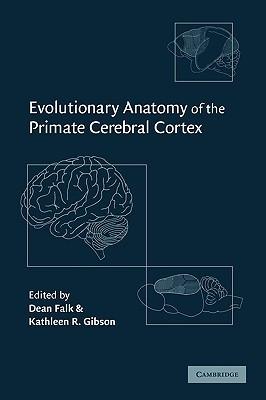 evolutionary-anatomy-of-the-primate-cerebral-cortex
