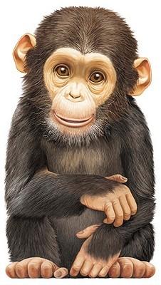 little-chimp
