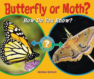 butterfly-or-moth-how-do-you-know