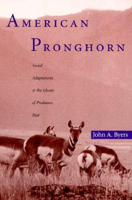 american-pronghorn-social-adaptations-and-the-ghosts-of-predators-past