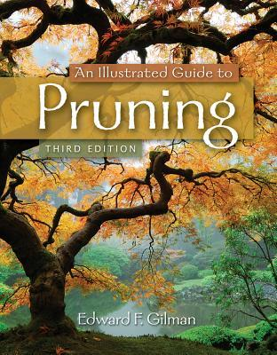 An Illustrated Guide to Pruning