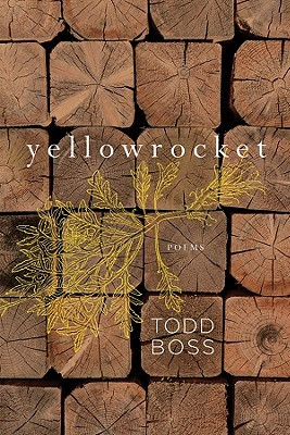 Yellowrocket by Todd Boss