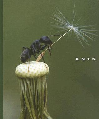 Ants por Sophie Lockwood MOBI EPUB 978-1592968176