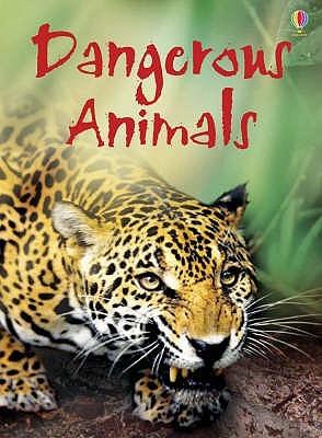 Dangerous Animals (Beginners)