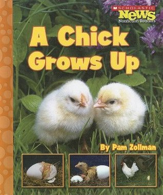 A Chick Grows Up