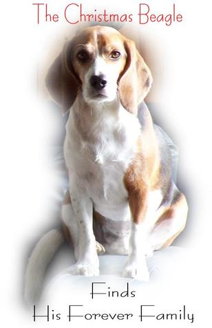 The Christmas Beagle Finds His Forever Family