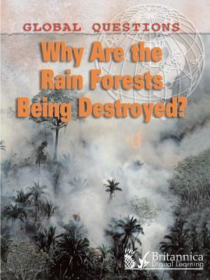 Why Are the Rainforests Being Destroyed?