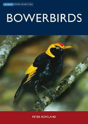 Bowerbirds