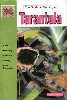 the-guide-to-owning-a-tarantula