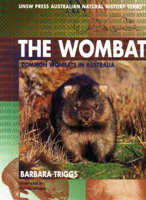 the-wombat-common-wombats-in-australia