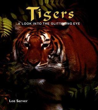 Tigers: A Look Into the Glittering Eye