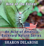 king-of-the-forest-an-acre-of-america-backyard-nature-series-volume-3