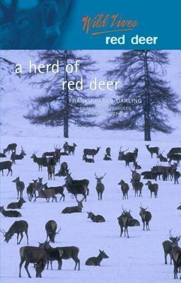 A Herd of Red Deer: A Study in Animal Behaviour