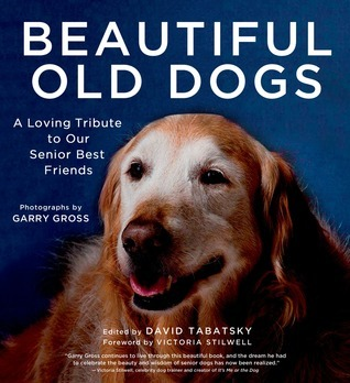 Beautiful Old Dogs: A Loving Tribute to Our Senior Best Friends