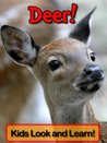 Deer! Learn About Deer and Enjoy Colorful Pictures - Look and Learn! (50+ Photos of Deer)