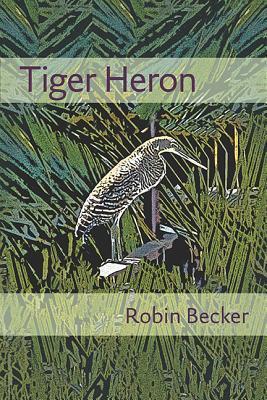 tiger-heron