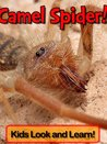 Camel Spiders! Learn About Camel Spiders and Enjoy Colorful Pictures - Look and Learn! (50+ Photos of Camel Spiders)