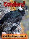Condors! Learn About Condors and Enjoy Colorful Pictures - Look and Learn! (50+ Photos of Condors)