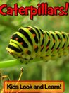 Caterpillars! Learn About Caterpillars and Enjoy Colorful Pictures - Look and Learn! (50+ Photos of Caterpillars)