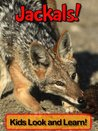 Jackals! Learn About Jackals and Enjoy Colorful Pictures - Look and Learn! (50+ Photos of Jackals)