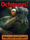 Octopuses! Learn About Octopuses and Enjoy Colorful Pictures - Look and Learn! (50+ Photos of Octopuses)