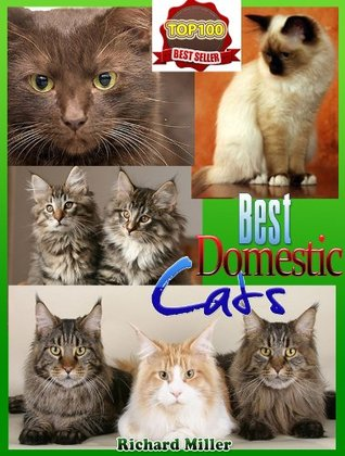 Best Domestic Cats