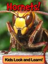 Hornets! Learn About Hornets and Enjoy Colorful Pictures - Look and Learn! (50+ Photos of Hornets)