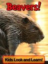Beavers! Learn About Beavers and Enjoy Colorful Pictures - Look and Learn! (50+ Photos of Beavers)