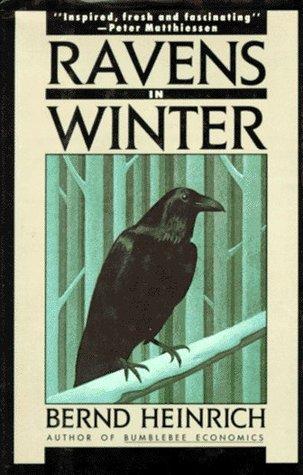 Ravens in winter by bernd heinrich 122665 fandeluxe Gallery