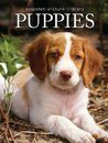 Puppies by Sonia Vallabh