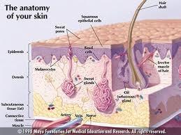 Manual of dermatology