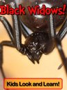 Black Widows! Learn About Black Widows and Enjoy Colorful Pictures - Look and Learn! (50+ Photos of Black Widows)