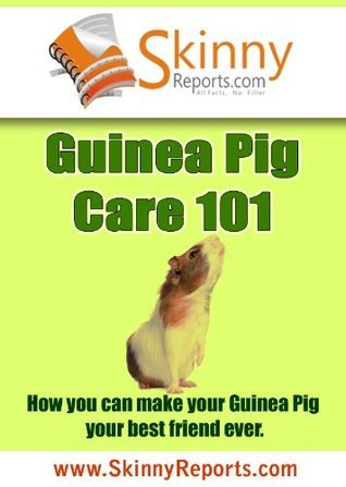 Guinea Pig Care 101: How you can make your Guinea Pig your best friend forever